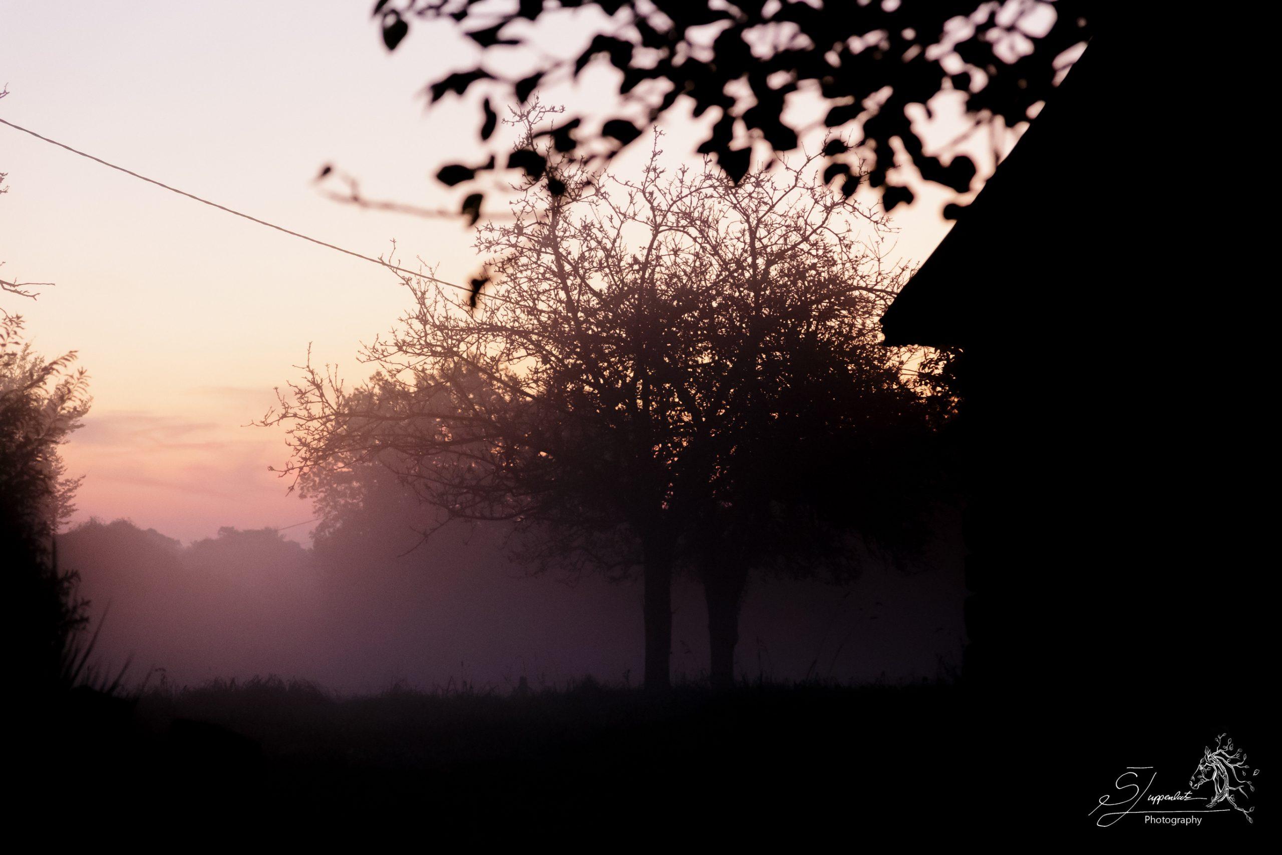 Misty Morning Light Through The Trees